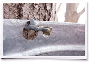 Folsom Tree Tap