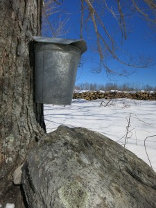 bucket on tree